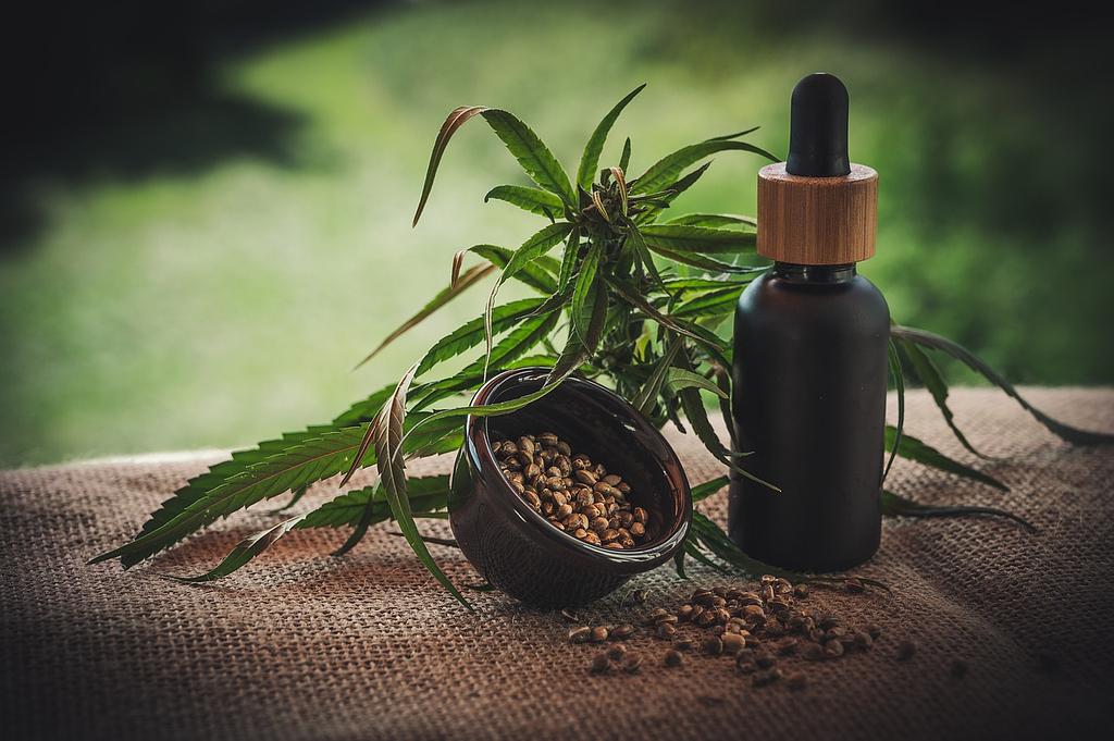 semillas de cañamo medicinal
