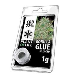 COGOLLO CONCENTRADO 22% CBD de la Variedad Golira Glue